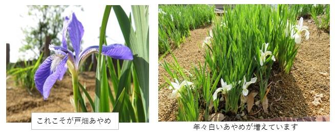 あやめ公園清掃1.jpg