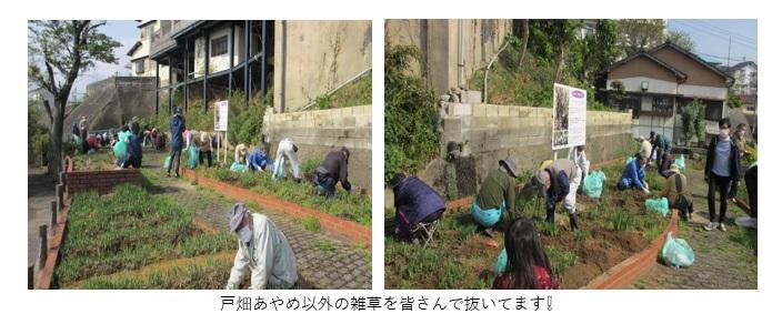 あやめ公園清掃2.jpg