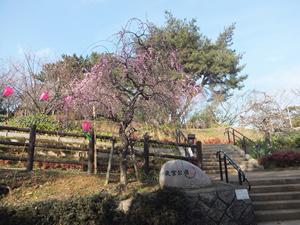 tenraiji_16050901.jpg