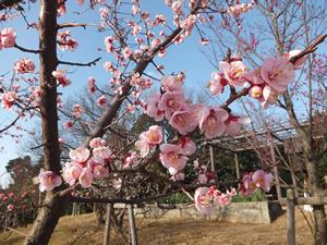 tenraiji_16050902.jpg